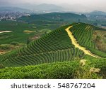 tea garden | Shutterstock . vector #548767204