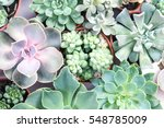 arrangement of the succulents... | Shutterstock . vector #548785009