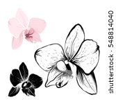 isolated orchid flowers on... | Shutterstock .eps vector #548814040