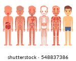 human body anatomy vector... | Shutterstock .eps vector #548837386