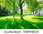 park trees | Shutterstock . vector #548998024