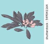 exotic flowers set. botanical...   Shutterstock .eps vector #549041164