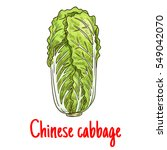 chinese cabbage. vector... | Shutterstock .eps vector #549042070