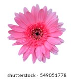 gerbera flower on white... | Shutterstock . vector #549051778