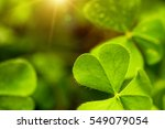 clover leaf in lens flare for... | Shutterstock . vector #549079054