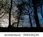 scene with backlit tree | Shutterstock . vector #549234124