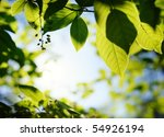 picture of a green leaves over... | Shutterstock . vector #54926194