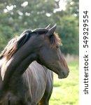 A Head Shot Of A Single Horse...