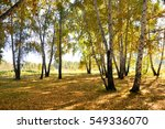 landscape early autumn. glade... | Shutterstock . vector #549336070
