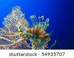 lionfish beside gorgonian fan... | Shutterstock . vector #54935707