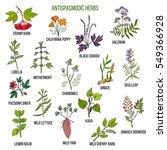 antispasmodic herbs. hand drawn ... | Shutterstock .eps vector #549366928