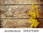 Small photo of Dainty yellow forsythia flower border on old worm-ridden rotten wood in a concept of fresh and new in spring versus vintage decay, with copy space