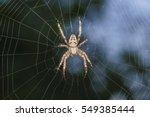Spider Garden Spider  Lat....