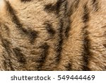 Colored And Striped Fur Of The...