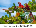 birds of costa rica  red macaws | Shutterstock . vector #549464920