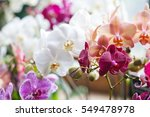 colorful flower orchids.... | Shutterstock . vector #549478978