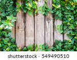 bamboo panels with ivy growing... | Shutterstock . vector #549490510