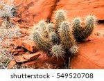 Red Canyon Kaktus  Nevada