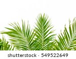 palm leaf isolated on white... | Shutterstock . vector #549522649