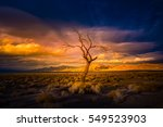 lone tree at sunset pyramid... | Shutterstock . vector #549523903