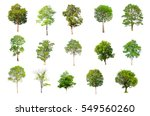 isolated trees on white... | Shutterstock . vector #549560260