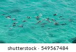 dolphins  byron bay australia | Shutterstock . vector #549567484