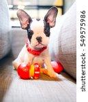 Stock photo puppy 549575986
