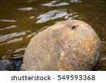 Red Tail Dragonfly On Rock At...