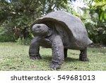Stock photo aldabra giant tortoise at tropical island in seychelles 549681013