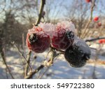 Frost  Snow And Ice Crystals O...