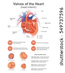 a heart valve opens or closes... | Shutterstock .eps vector #549737596