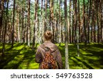 girl searching mushrooms  pine... | Shutterstock . vector #549763528