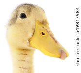 Duckling Who Are Represented O...