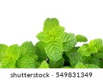 Green Peppermint Leaves