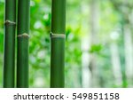 Fresh Bamboo Trees In Forest A...