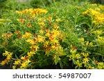 Mossy Stonecrop Flower   Sedum...