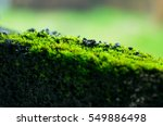 the mossy green fence. | Shutterstock . vector #549886498
