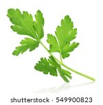 a sprig of parsley in the air... | Shutterstock . vector #549900823
