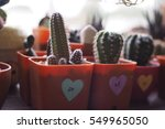 Small photo of blur cactus