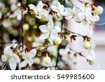 white folwers   Shutterstock . vector #549985600