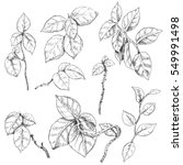 hand drawn branches and leaves... | Shutterstock .eps vector #549991498