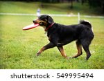 Black Dog Is Carrying A Disk I...