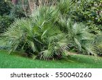 Small Palm Trees On The Lawn I...