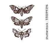 moths. sphingidae. set ...   Shutterstock .eps vector #550099396