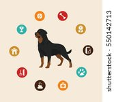 Dog Rottweiler Infographic...