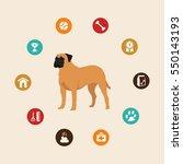 Dog Bullmastiff Infographic...