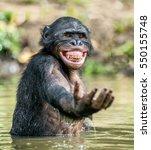 Smiling Bonobo In The Water. ...