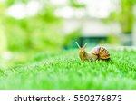 A Snail Crawling On Green Gras...