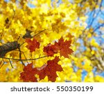 red and yellow leaves on maple... | Shutterstock . vector #550350199