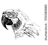 hand sketch head ara. vector...   Shutterstock .eps vector #550380880